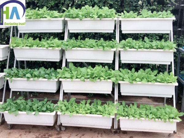 Bán khay nhựa trồng rau giá rẻ