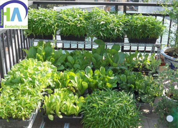 KHay nhựa trồng rau tại hà nội