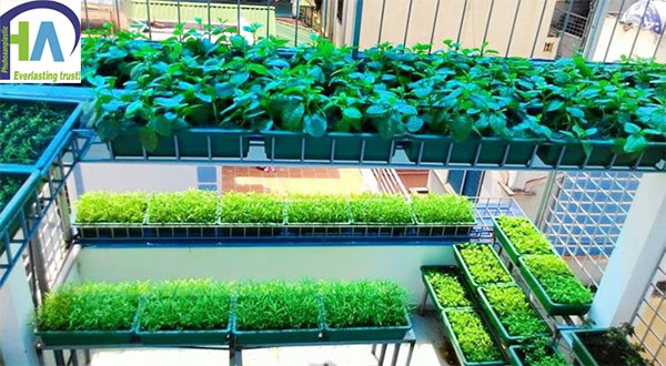 Khay trồng rau loại nhỏ tiết kiệm diện tích